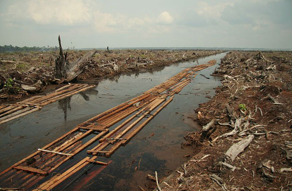 riau_deforestation