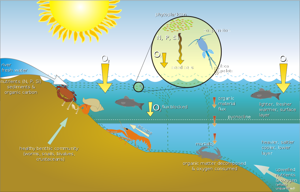 Scheme Eutrophication Sm on Ocean Marine Ecosystem Food Web